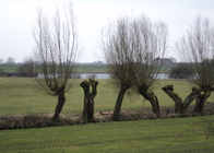 History Trips | The river Rhine, Oosterbeek